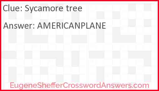 Sycamore tree Answer